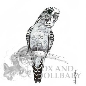 Australian Budgie on branch Special Edition Bird Art Print