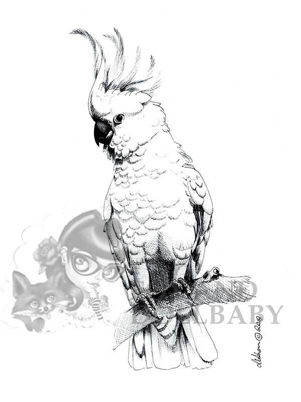 Australian Cockatoo on branch Special Edition Bird Art Print by Eumundi Artist de Shan. bird artwork, Australian wildlife prints, Birds of Australia