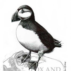 Puffin Special Edition Bird Art Print