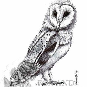 Australian Owl Special Edition Bird Art Print